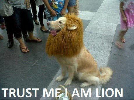 Funny Animal Memes For Adults : Funny dog memes dogtime