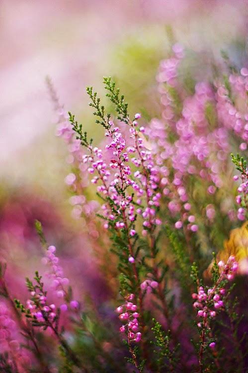 *Spring Mood*