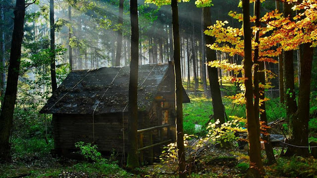 Top 10 World's Most Beautiful Forest Houses