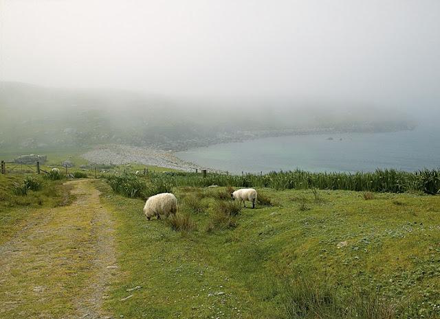Owce na Hebrydach Zewnętrzych