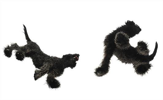 foto,perro,fotografia,dog,lanas,pelo,negro,black