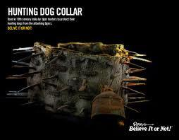 Hunting Collar