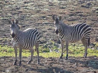 Reisen Afrika Sambia South Luanga Nationalpark