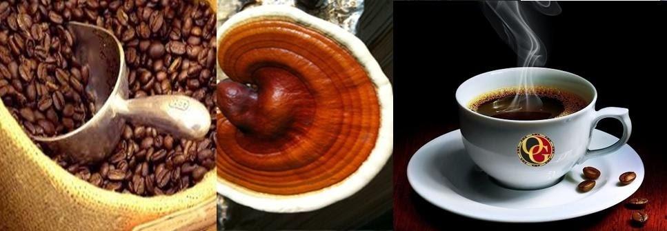 Thực phẩm chức năng Ganoderma Organo Gold Nấm linh chi đỏ