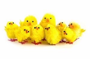 Small yellow baby chicks