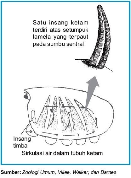 Sistem Penapasan pada Arthropoda Laba-laba Kalajengking