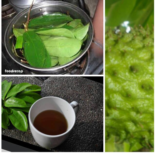 how to make tea from guyabano leaves