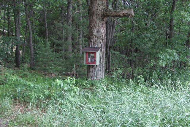 Little Free Library in the Woods
