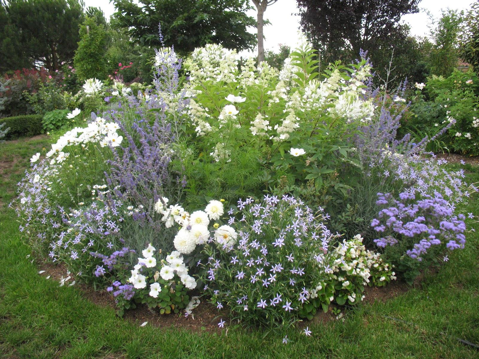 Roses du jardin ch neland taille des hydrang as - Taille des hortensias en mars ...