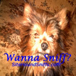SiteHoundSniffs.com