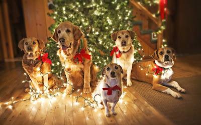Mascotas Navideñas junto al arbolito de Navidad