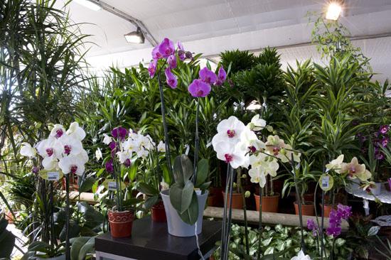 Arte y jardiner a plantas de interior un rinc n de la for Diseno jardines interiores para casas