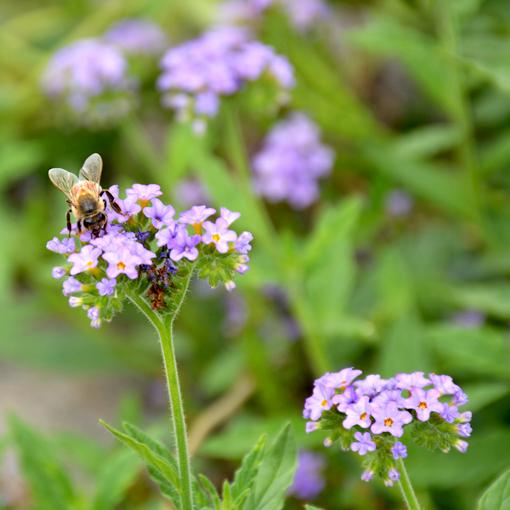A Day in the Garden | Atlanta Botanical Garden