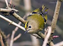 "The latest on my Blog  ""Wildlife In a Suburban Garden"""