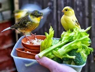 Unsur Penting pakan burung