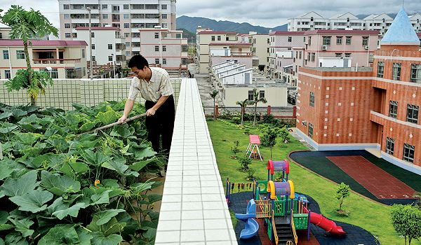 Japan My Little Vegetable Garden Roof Top Gardening