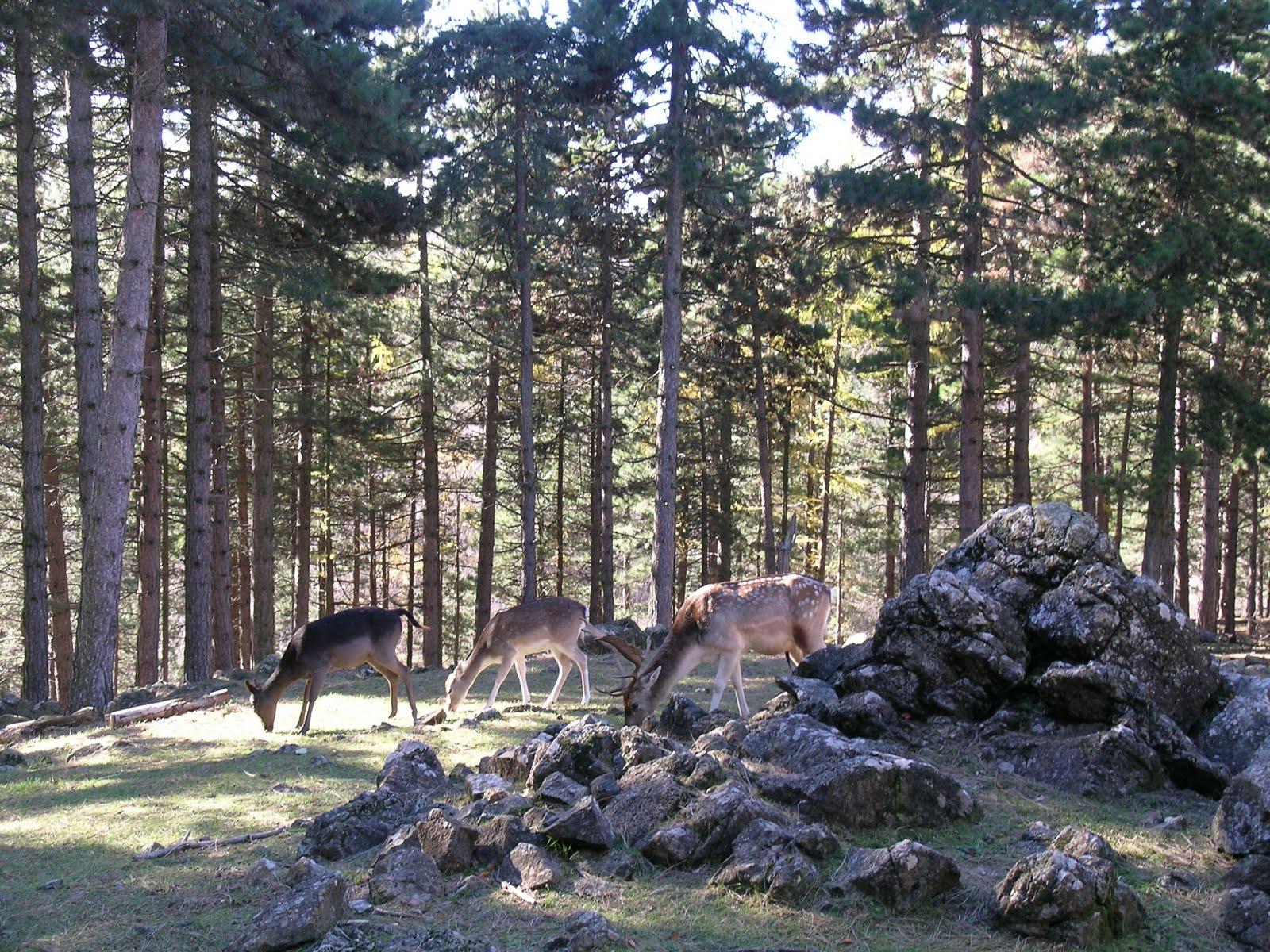 Giardino Pietra Corva : Romagnese domenica terzo appuntamento al giardino botanico alpino