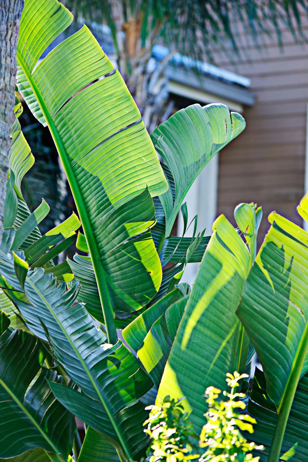 tropical green foliage