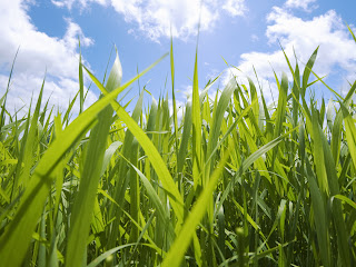 Grass Sky Wallpapers