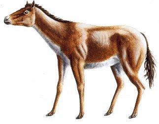 caballos del oligoceno Parahippus