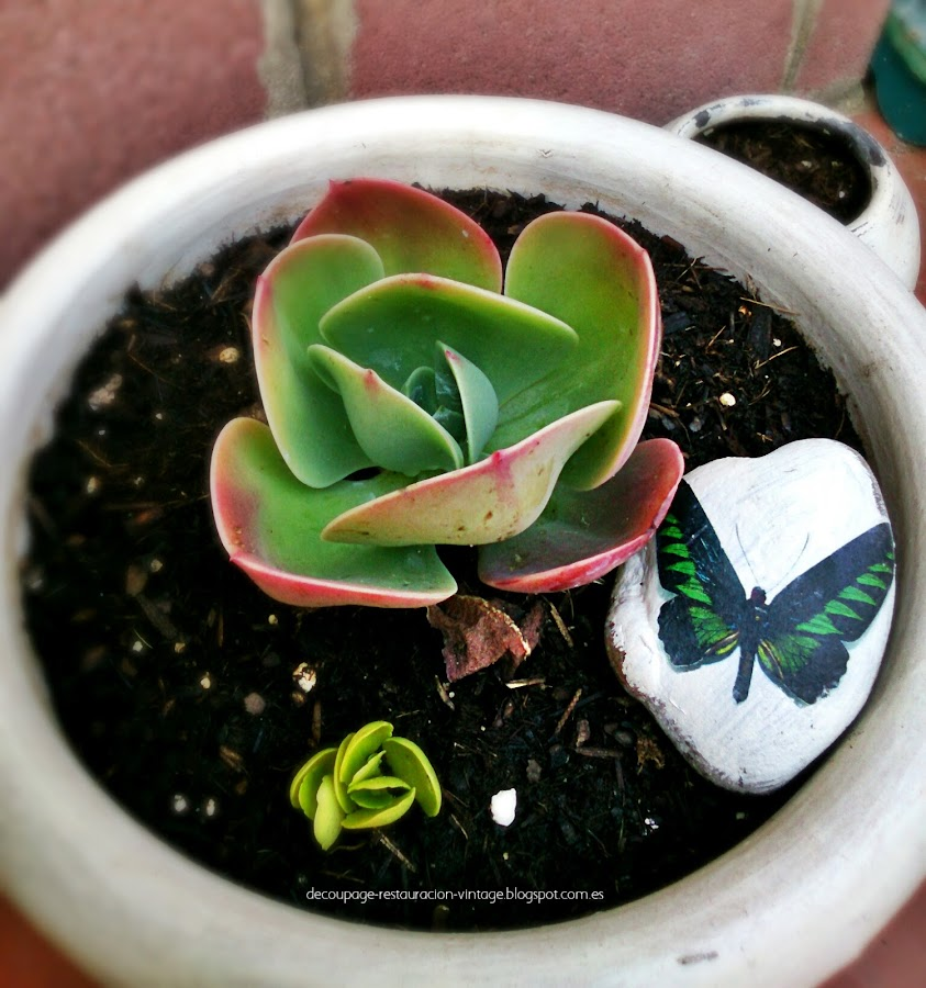 40 ideas de reciclaje y manualidades para el jard n plantas for Bordillos de plastico para jardin
