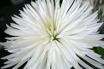 Focus on life: Bloom! pure, beauty :: All Pretty Things