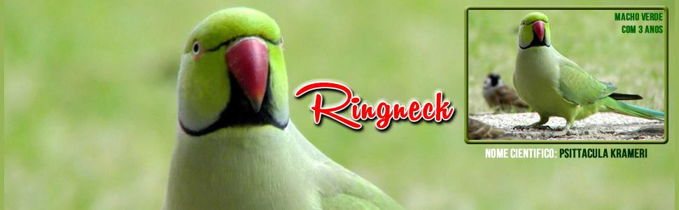 Ringenck