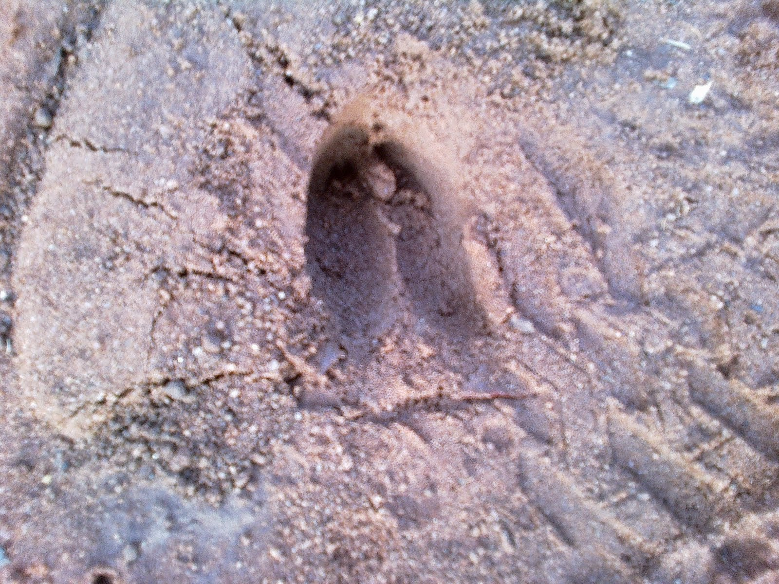 Foot Print of Bason