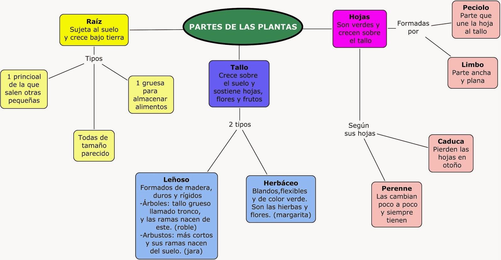 PIRULETAS DE MENTA 6º DE PRIMARIA: Partes de la planta: esquema
