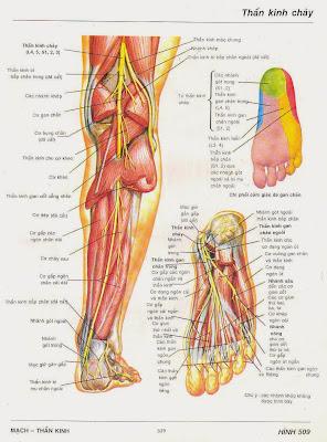 Hội chứng ống cổ chân