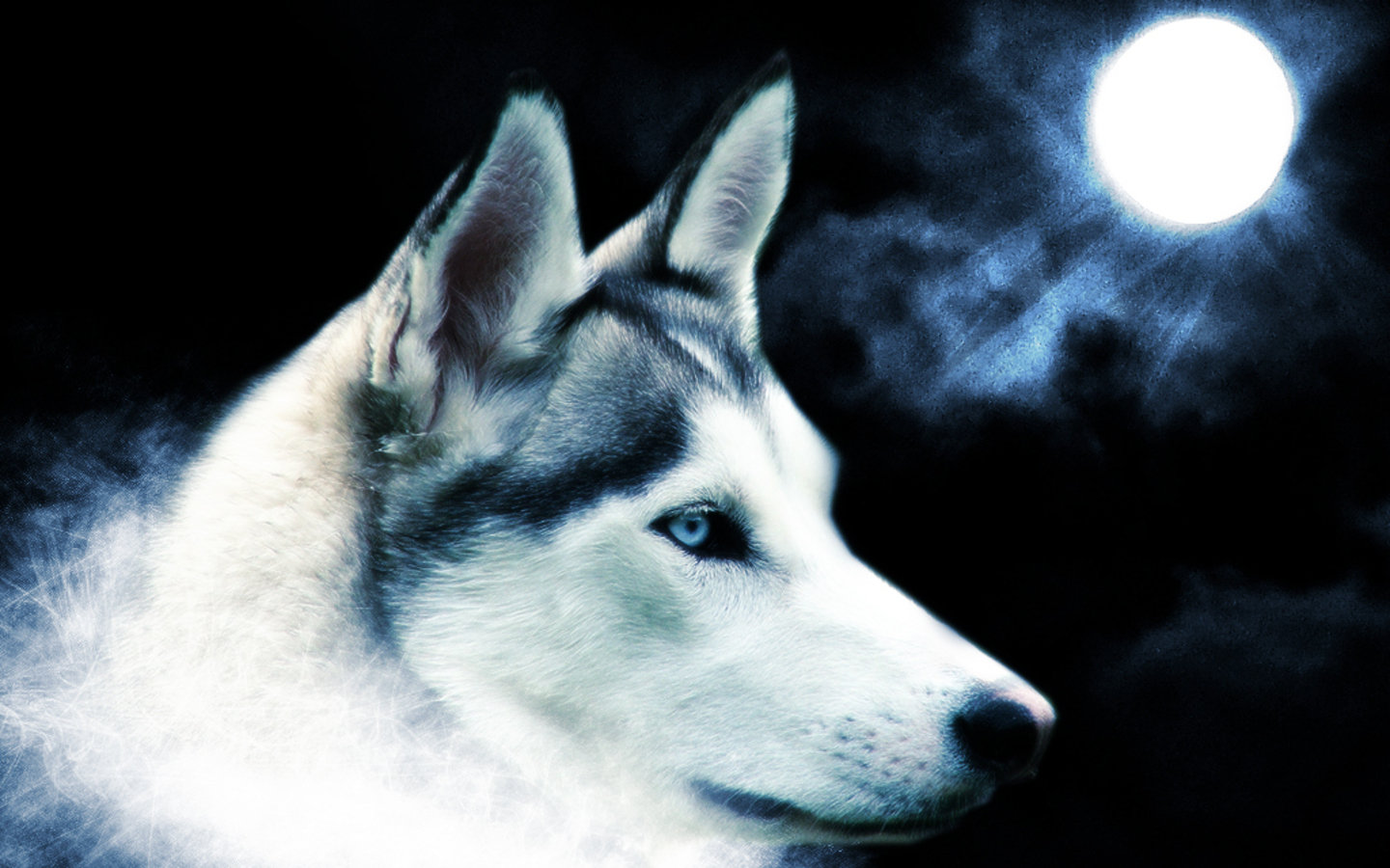 wolf wallpapers wolf wallpaper wallpaper wolf wolves
