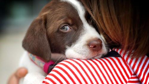 sos cani aiuto cani gatti volontari
