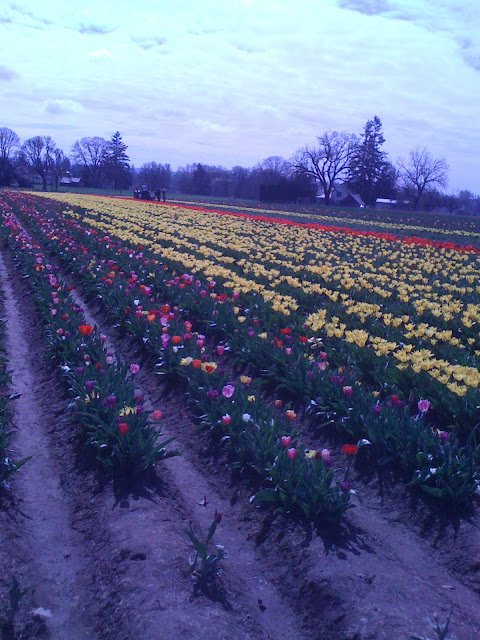 Tulip Festival OR