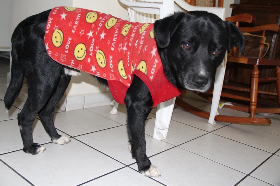 blogs peruanos,blog personal,julia zavala, erase una vez, historias de perros, perro perdido, patas blancas