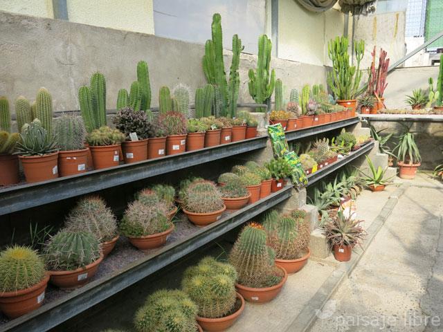 Visita al centro de jardiner a pradillo paisaje libre - Viveros en madrid ...