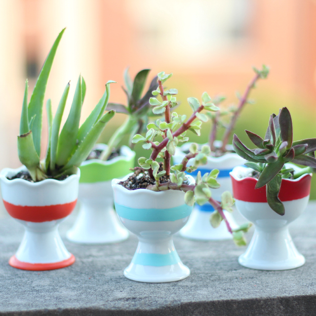 Sweet succulent egg cup garden by Design Improvised, featured on I Love That Junk