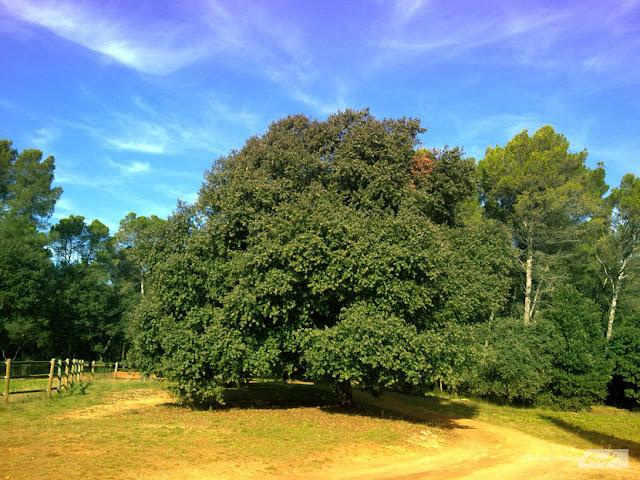bosque-encina-otoño