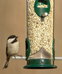 Wild Birds Unlimited Four Ways To Keep Squirrels Off Your