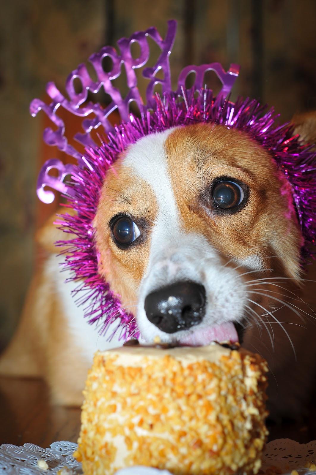 Поздравление с днем рождения с собачкой 23