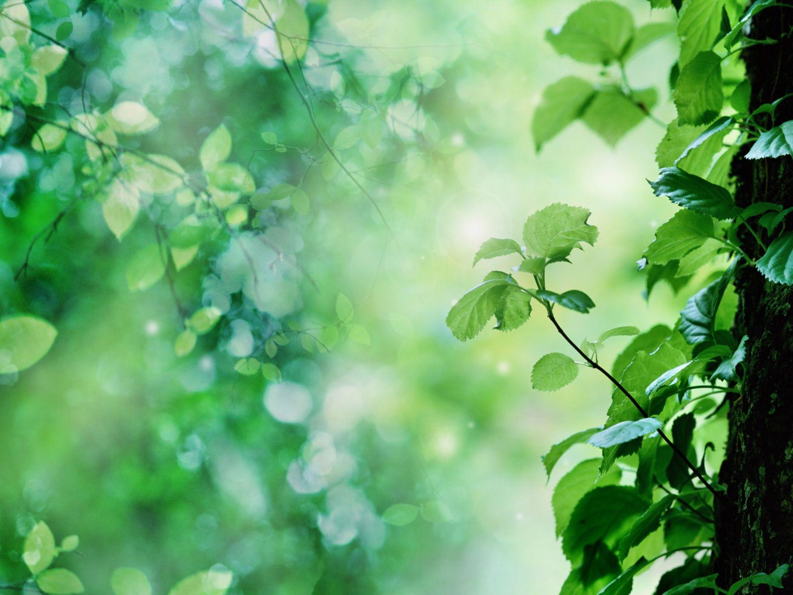 Leaf green nature leaves background wallpaper