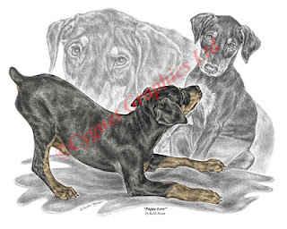 Doberman Pinscher Puppy Art - Pencil Drawing by Kelli Swan