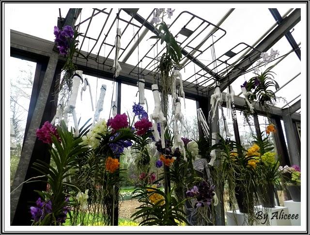 aranjamente-orhidee