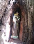 natureza constrói oratório para Santo Antônio