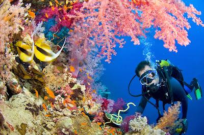 teeming reefs