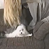 This girl tries to dry up her dog, but an electrifying thing happen
