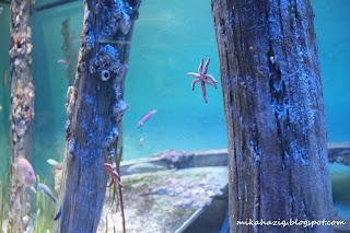 oceanarium sentosa