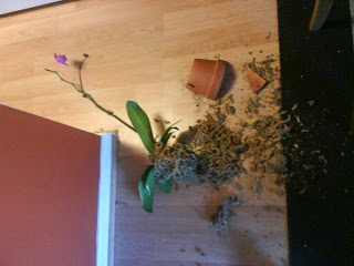 orchid destroyed by cat