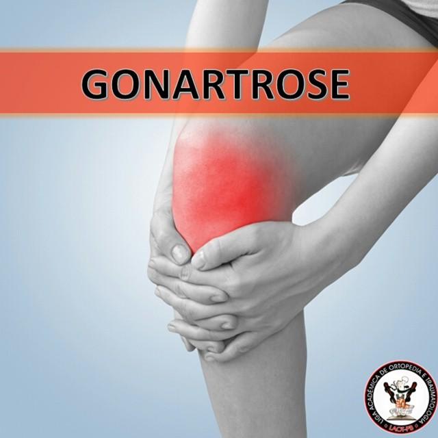 Tratamento para dores e doenças articulares