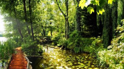 Foto del bosque con río y puente de madera