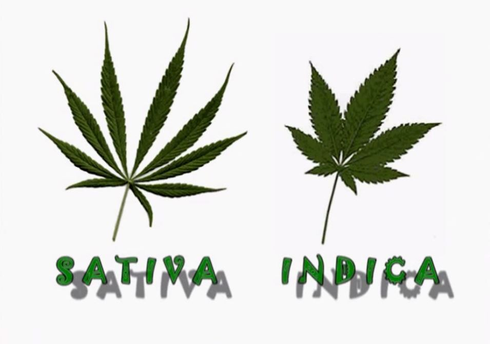 marijuana cause and effect Top 10 brain and hormone effects of marijuana and how certain hormones can alter the effect marijuana this indicates the drug causes individuals to.
